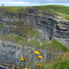 ireland-cliffs-of-moher